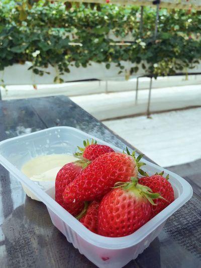 Spring Strawberry Strawberry Hunting Sweet Enjoying Life Holiday