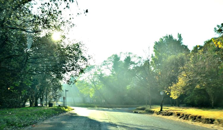 Tree Road The Way Forward Street Morning Nature Outdoors No People Yellow Day Fog Beauty In Nature Sky Mobile Photography Scenics Freshness Growth Fall Morning Sun Morning Drive To Work Morning Drive Beauty In Nature EyeEm Nature Lover Autumn
