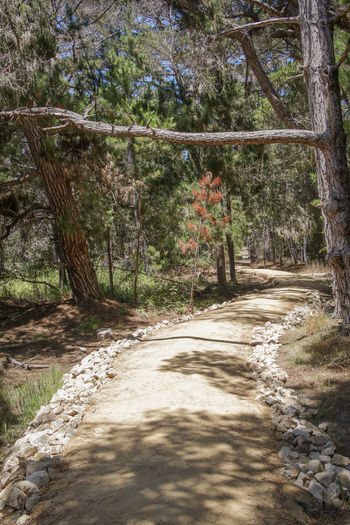 man-made trail Green Color Hot Day Nature Lost Landscapes Exploring California Enjoying Life Trees Adventure Tree Shadow Sky Pathway Woods Narrow Greenery Walkway The Way Forward Countryside Empty Road Treelined Growing Tree Trunk Branch Sunrays Long Blossoming  Flora Green