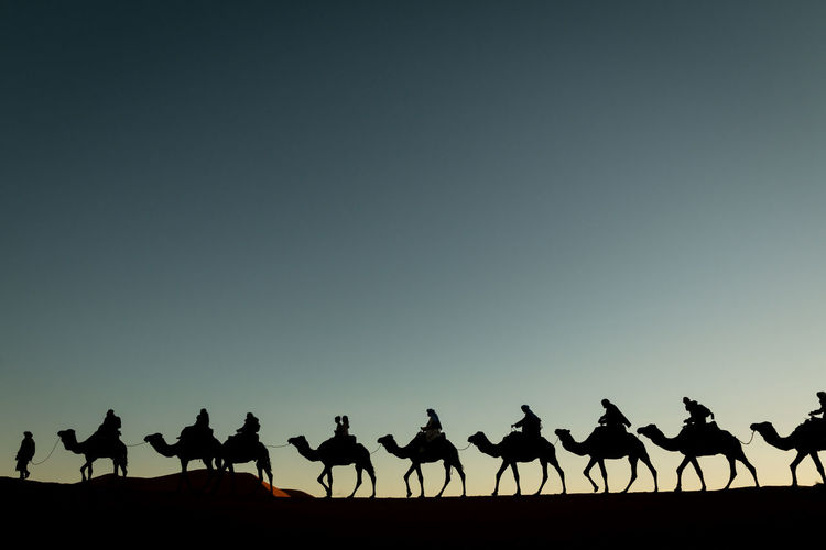 camel trek into