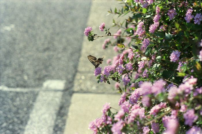 Plants Butterfly Papilio アゲハ蝶