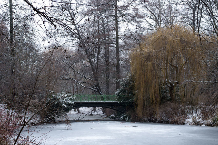 Beauty In Nature Berlin Bridge City City Life Cold Temperature Day Europe Forest Garden Nature No People Outdoors Snow Snow ❄ Snowing Strees Streetphotography Tree Tree Trees Winter Winter