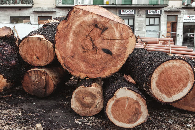 Wood WoodLand Brown Close-up Day Deforestation Ecology Firewood Forest Fossil Fuel Fuel And Power Generation Large Group Of Objects Log Lumber Industry Nature No People Outdoors Stack Still Life Stump Timber Tree Trunk Wood Wood - Material