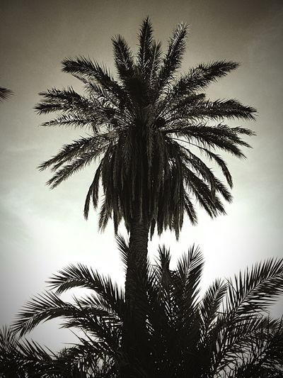 Palm Trees Palms Palm In Black Taking Photos EyeEm Nature Lover
