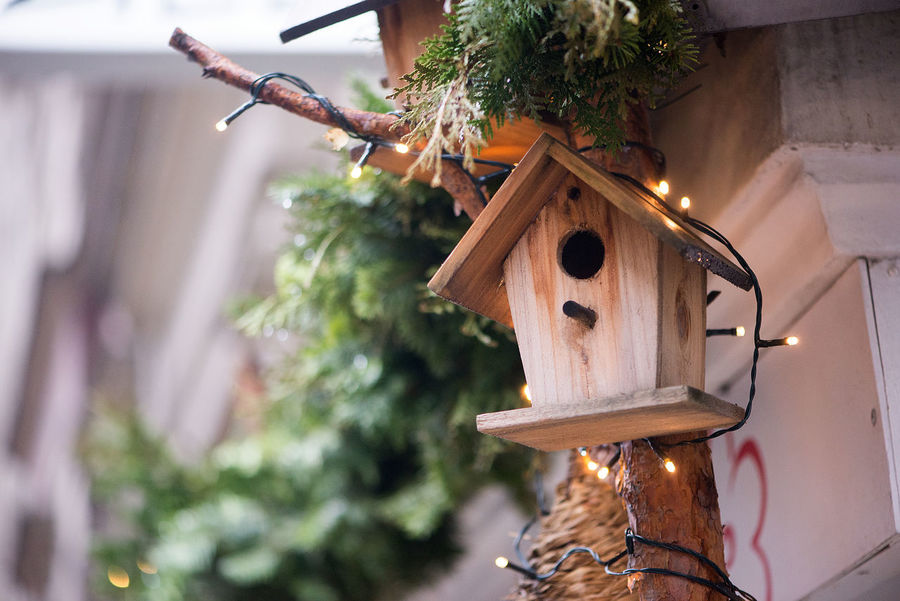 Christmas Lights Winter Wintertime Architecture Bird Cage Christmas Christmas Decoration Christmas Holidays Christmas Ornament Christmas Tree Close-up Day Hanging Nature No People Outdoors Tree Winter Season Wood - Material