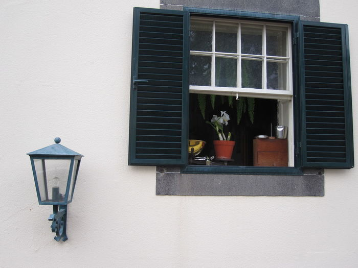 Weight scale with potted plant on window sill