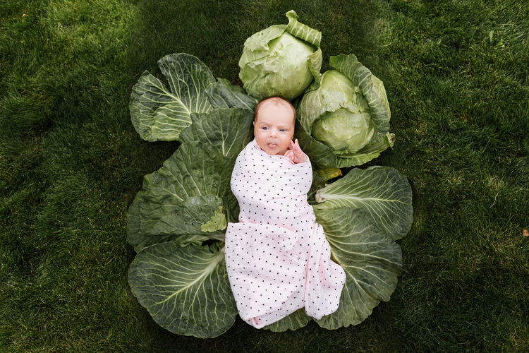 Newborn girl 3 months is lying in a green cabbage. vegetables. happy childhood.
