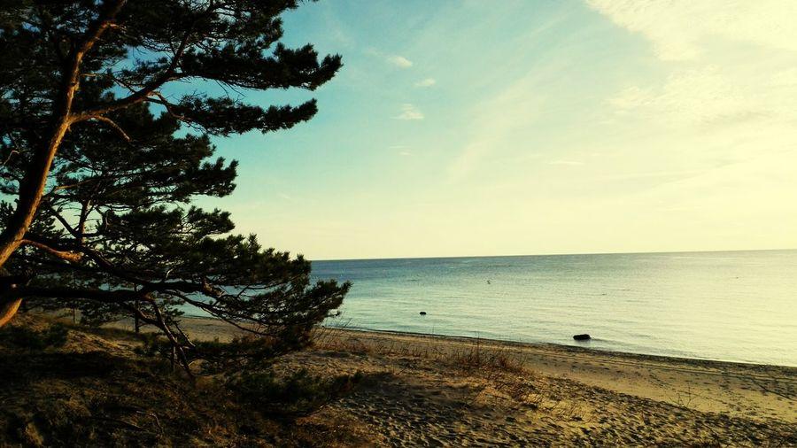 Sea Sun Tree Love This Place