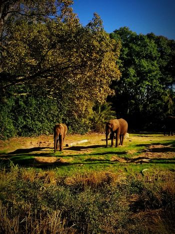 Elephant Safari Trees Tree Green Color Animal Themes Outdoors Nature