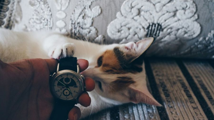 Close-up of cat holding human hand holding watch