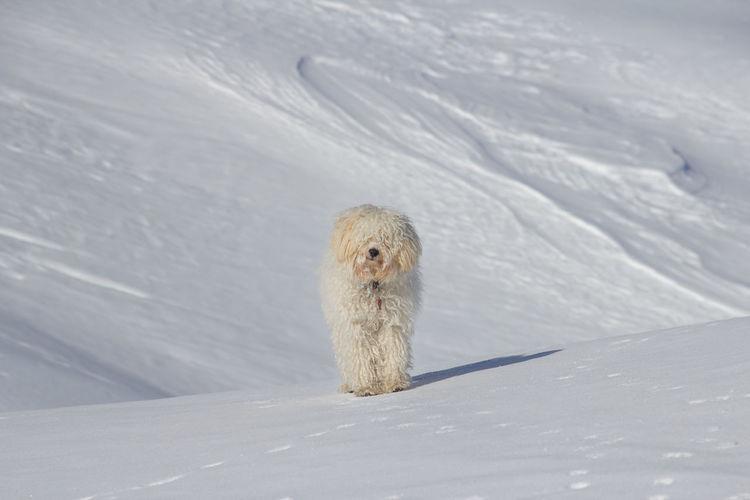 White dog in
