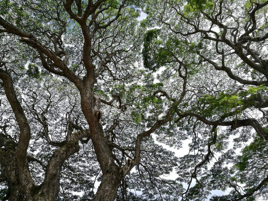 Oldtree Vines Leaves Province WhenInSiquijor Travelph Nikkatheexplorer Travelwithheart Travelphotography Solivagant