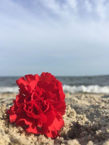 Beach #sun #nature #water #TagsForLikes.com #TagsForLikesApp #TFLers #ocean #lake #instagood #photooftheday #beautiful #sky #clouds #cloudporn #fun #pretty #sand #reflection #amazing #beauty #beautiful #shore #waterfoam #seashore #waves #wave