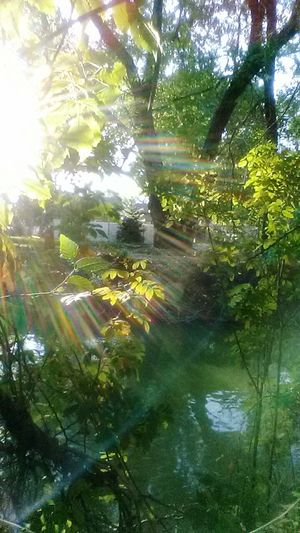 Riverside Photography Reflection_collection Beside The Road Overlooked Beauty Serene Outdoors Accidental Effect