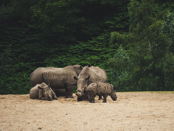 View of rhinos in the zoo