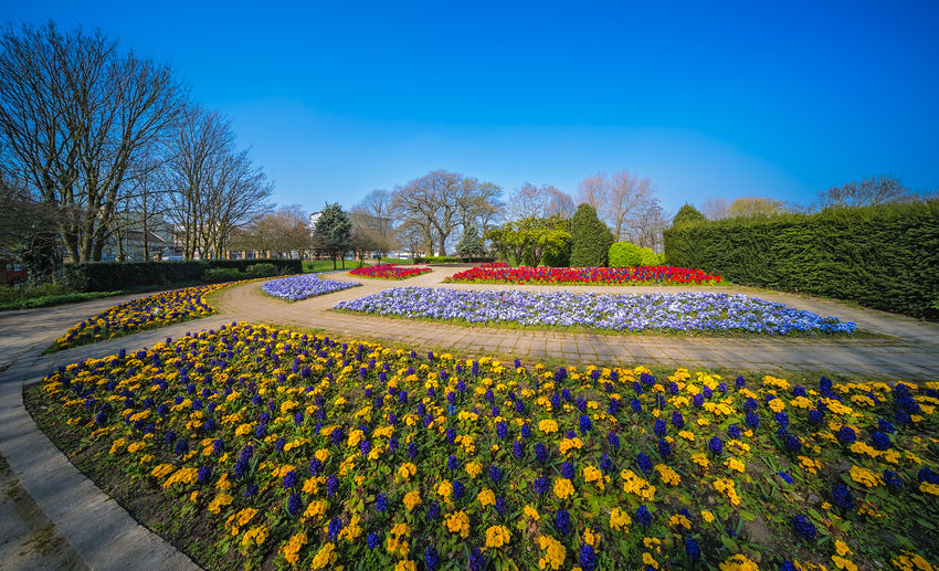 Scenic view of flowering plants against blue sky