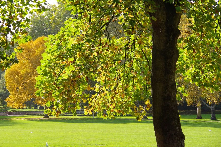 Tree Nature Growth Green Color Grass Cardiff Autumn Park Scenics Tranquility No People Autumn Leaf Outdoors Branch Horizontal Day
