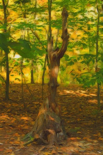 Beauty In Nature Nature's Sculpture Tree Trunk Woodlands Paint Edit