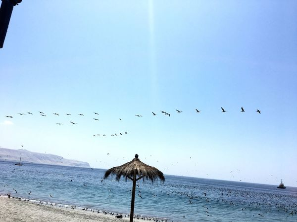 Mejillones Bird Flying Animal Themes Animals In The Wild Large Group Of Animals Flock Of Birds Sky Nature Sea Beauty In Nature Outdoors Day No People Scenics Beach Migrating Horizon Over Water Spread Wings Water