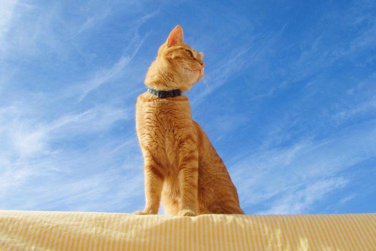 Pet Portraits Sashimi Pets Cat Sky Pet Portraits