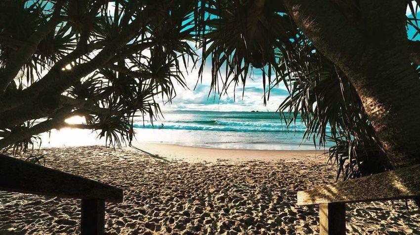 New south Wales. Australia. Tree Water Sea Beach Sand Tourist Resort Horizon Over Water Seascape