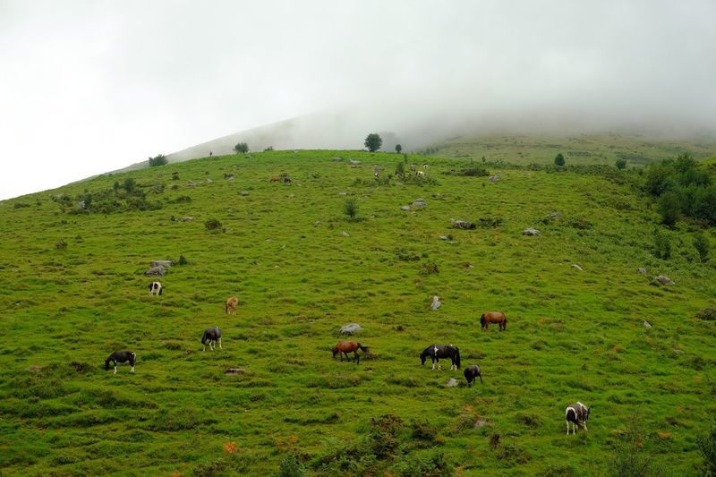 High angle view of horses on landscape
