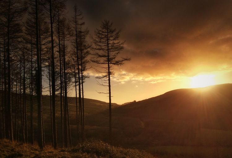 Bare trees on landscape at sunset