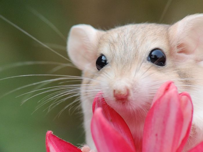 Close-up portrait of cute white pink outdoors