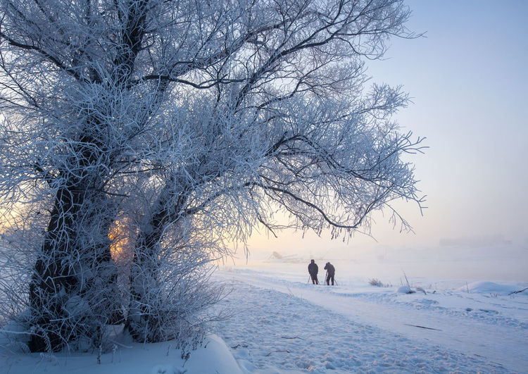 Tree Snow Cold Temperature Pets Winter Togetherness Dog Sky