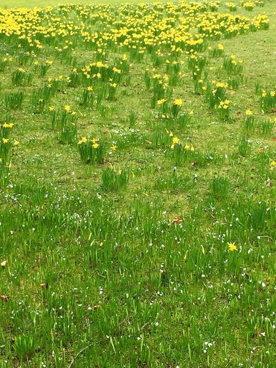 Grass Green Color Growth Nature Field Beauty In Nature Day No People Outdoors Freshness