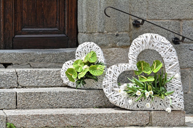Potted plant by door of stone wall
