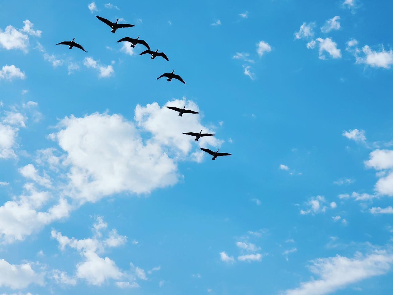 LOW ANGLE VIEW OF BIRDS IN SKY