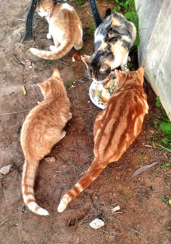Cats eating Cats Animals Catlovers Gatti