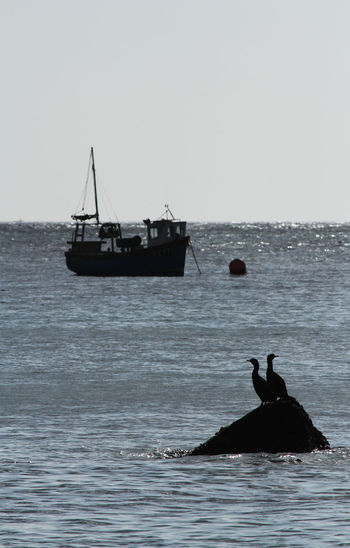 A pair of cormorants sitting on a rock at sea in silhouette with a small fishing boat on the ocean. Beauty In Nature Bird Bird Photography Birds Birds_collection Boat Calm Cormorant  Fishing Fishing Boat Fishing Boats Horizon Over Water Mode Of Transport Nature Nautical Vessel Outdoors Sea Seabird Silhouette Silhouette_collection Silhouettes Tranquil Scene Tranquility Water Waterfront