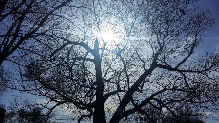 Low angle view of sunlight streaming through bare tree