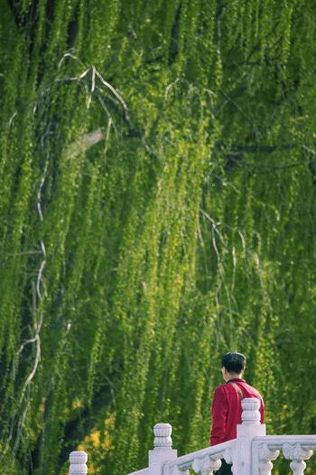 凉风花荫地,偷躲事事繁,白玉桥栏畔,绿柳过红男。 willow Willow Tree People Springtime Bridge Rear View One Person Outdoors