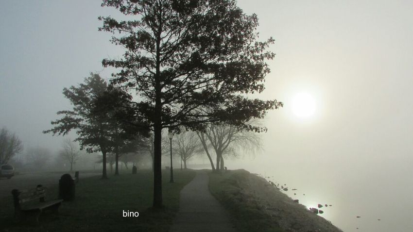 From The Archives Foggy Sunrise Around The Lake Cool And Creepy! Alone In Nature Quiet Moment Lake Cadillac Pure Michigan