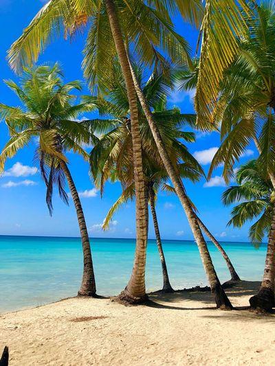 Beatiful Place Beatiful Nature Turquoise Water Strand Palmen Nature Photography Dominican Republic Nature Water Sea Land Beach Beauty In Nature