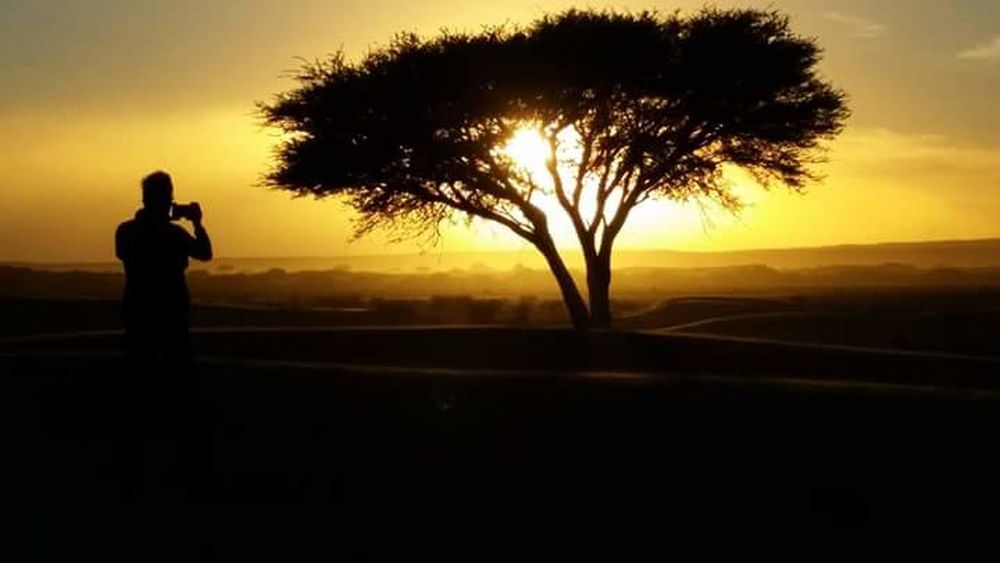 Morroco Desret Bivouac Silhouette Sunset Adult Back Lit Tree People One Person Nature