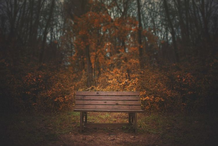 Empty bench in forest during autumn