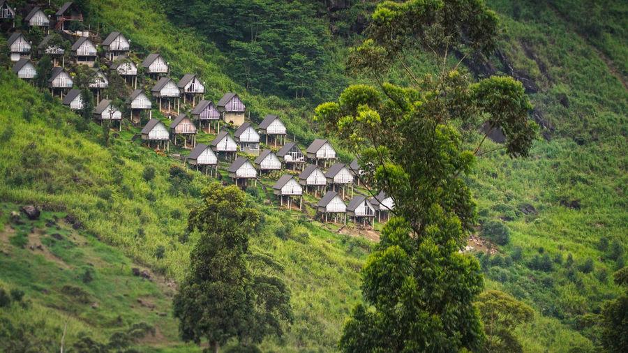 Hills Houses