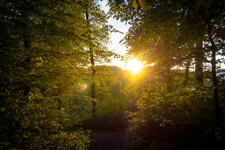 Abendlicht Abendstimmung Beauty In Nature Brightly Lit Forest Growth Lens Flare Outdoors Plant Scenics - Nature Sunlight Tranquility Tree
