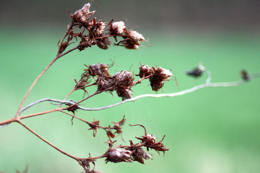 Beauty In Nature Close-up Dried Plant Fragility Nature No People Outdoors Plant Seed Capsule
