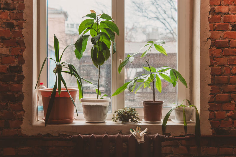 Potted plants stand on the windowsill in the morning in the loft. simple gardening in the apartment