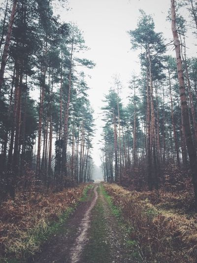 Forest obsession- part 1 VSCO Eye4photography  Vanishing Point Vscocam EyeEm Nature Lover Forest Nature_collection IPSTrees&Leaves