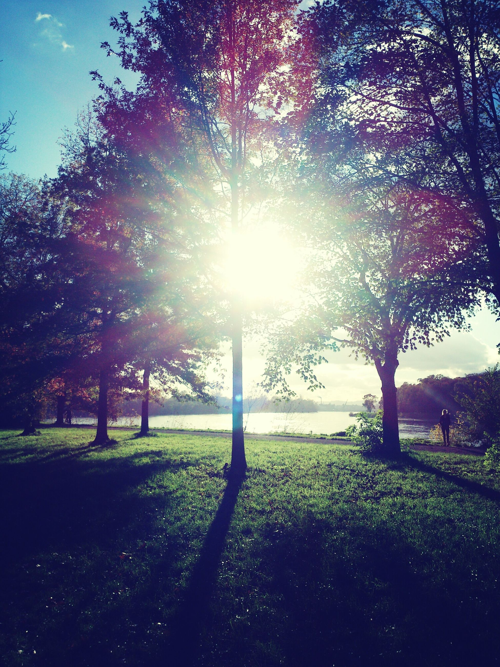 tree, sun, sunbeam, sunlight, grass, lens flare, tranquility, field, tranquil scene, growth, nature, sky, beauty in nature, park - man made space, landscape, sunny, grassy, scenics, back lit, shadow