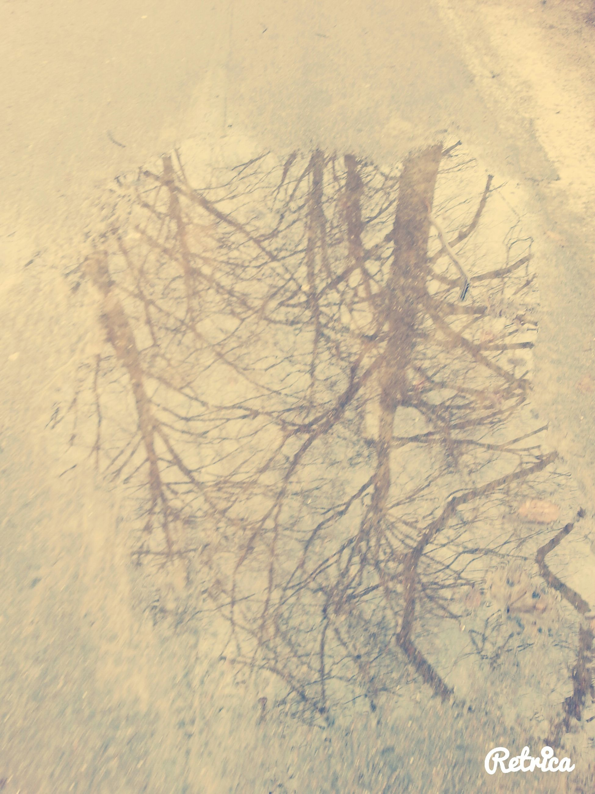 bare tree, high angle view, text, tree, tranquility, western script, communication, nature, day, outdoors, no people, branch, full frame, wall - building feature, tranquil scene, backgrounds, landscape, sand, footprint, growth