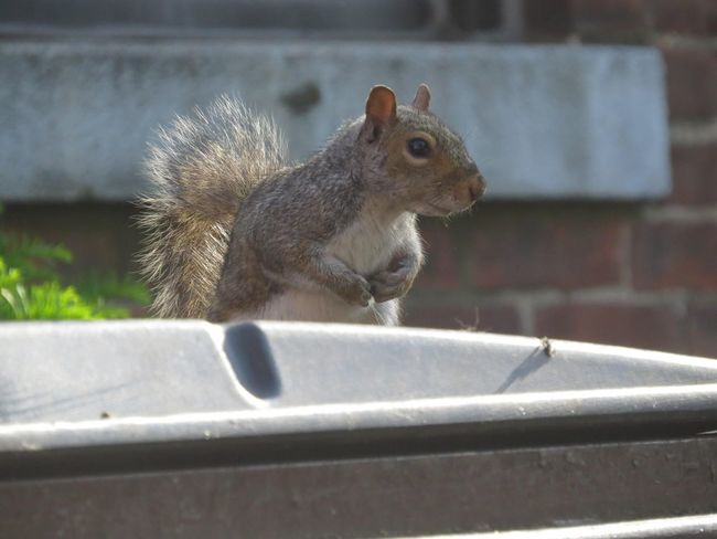 thinking 😅 Squirrel Close-up Trashcan Rodent First Eyeem Photo