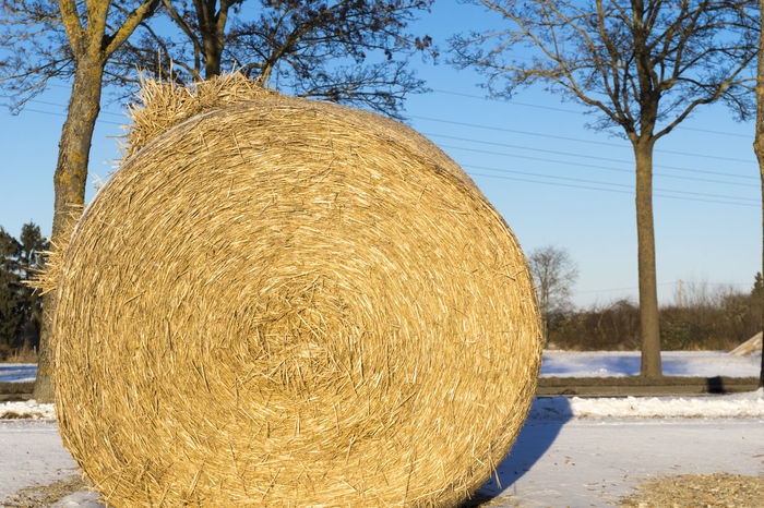 Closeup of a Hay bale in Winter Close-up Cold Dried Dry Farm Farming Frozen Hay Hay Bale Hay Bales Hay Bundles Ice Nature Outdoor