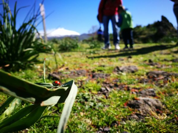 Coccinella Etna Sicily Nature EyeEmNewHere HuaweiP9 Huaweiphotography Huawei Mountain Sport Sky Grass Close-up Plant Landscape Green Color